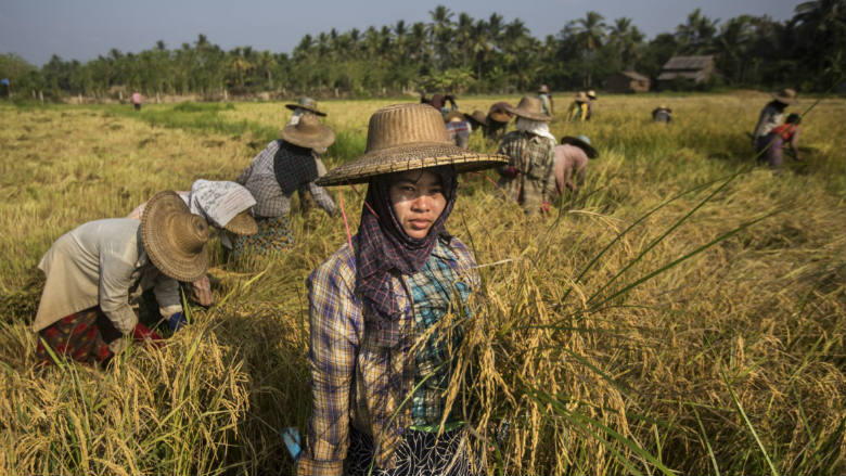Ayeyarwady Paddy Farmers Step Up Productivity With Smart
