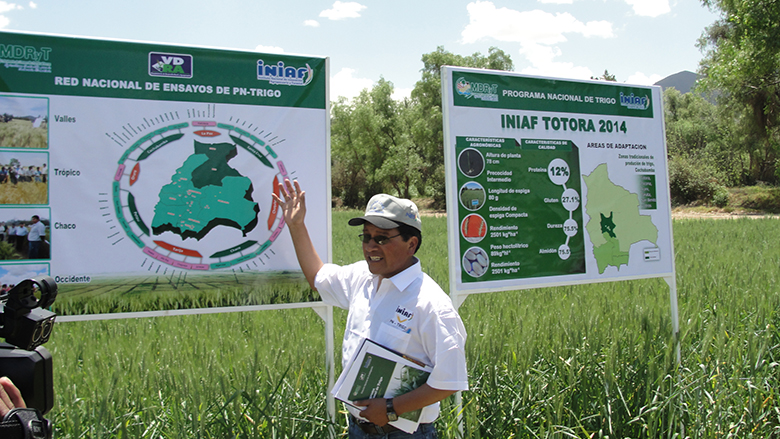 Bolivia's research program on wheat is delivering improved varieties across the country.