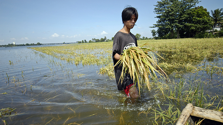 Man walking through a flooded rice field in the Philippines.