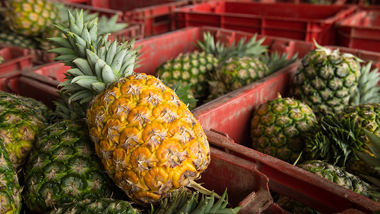 Ghana SDF: Pineapple Experts Bring Skills to Ghana's Pineapple Belt