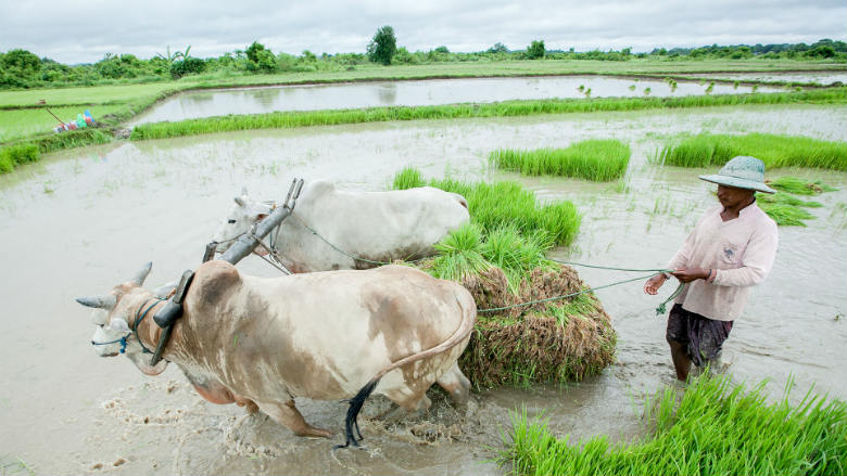 Image result for farmers in Myanmar