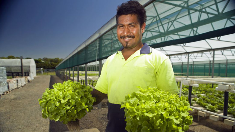 Seasonal Work Brings Economic Opportunities for Pacific Islanders