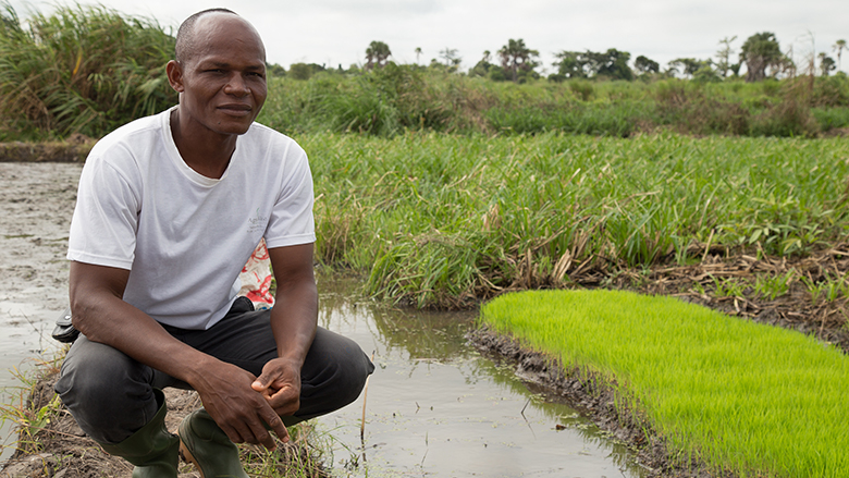 The West Africa Agricultural Productivity Program is working with Cote D'Ivoire –and other countries in West Africa--to revive and strengthen seed systems.
