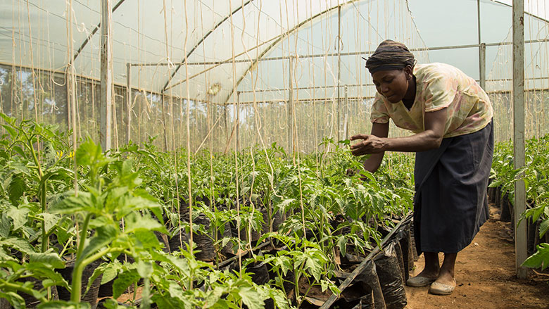 Scaling Climate-Smart Agriculture in Ethiopia, from the