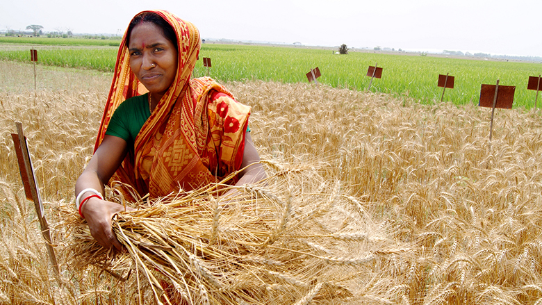 The Integrated Agricultural Productivity Project is helping farmers in Bangladesh boost food security and incomes.