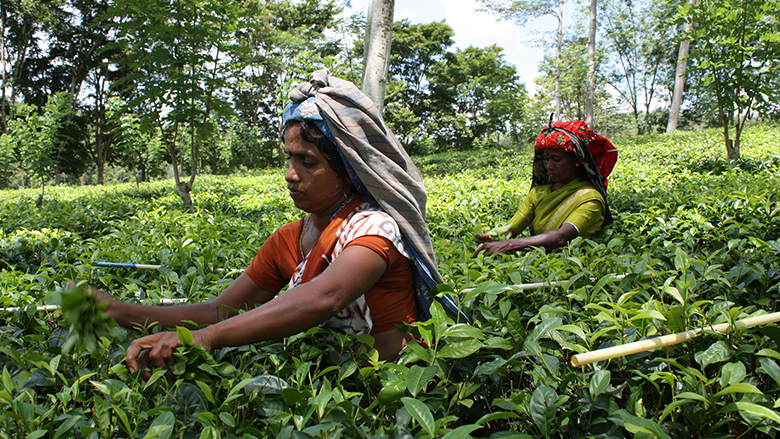 The World Bank supports Sri Lanka's push to modernize agriculture to create job opportunities.