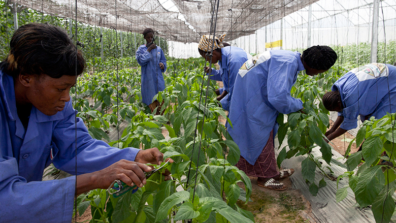 Shaping the Food System to Deliver Jobs