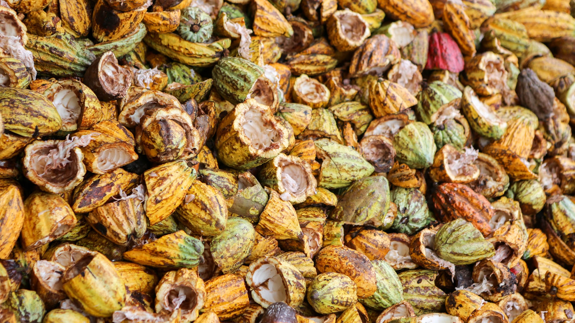 Forest- and farmer-friendly cocoa in West Africa