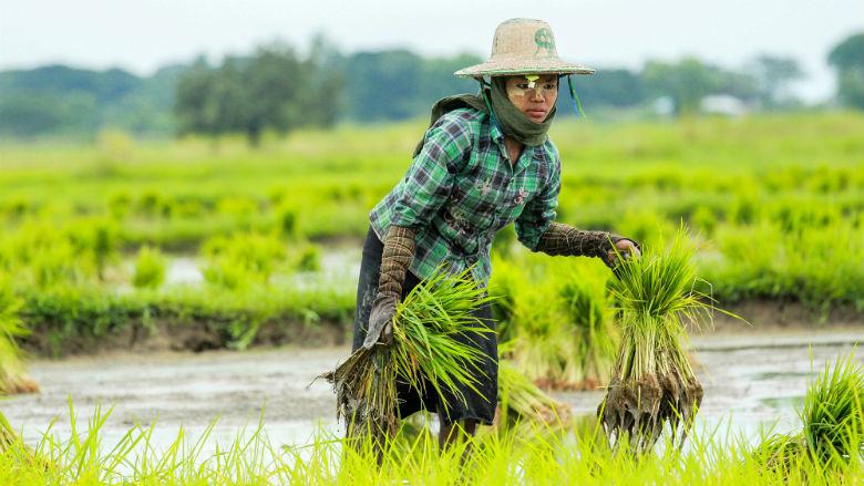 Myanmar Economic Monitor December 2016