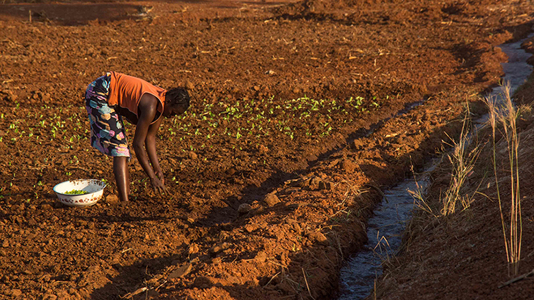With new long-term financing, South Africa plans to increase support for emerging farmers.