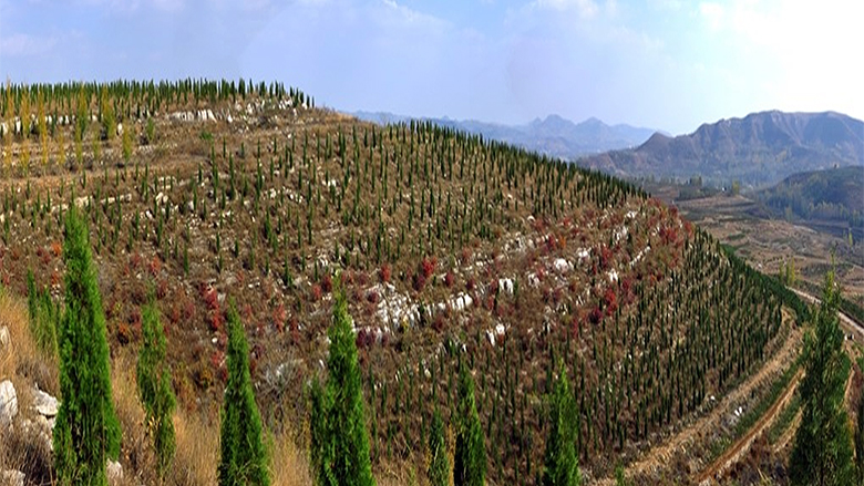 China: Afforestation Project in Shandong Improves