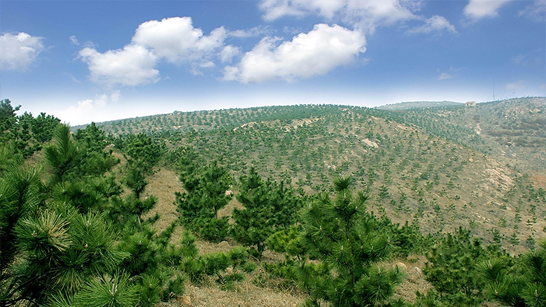 Dongying, China: Growing Forests in Saline Soil