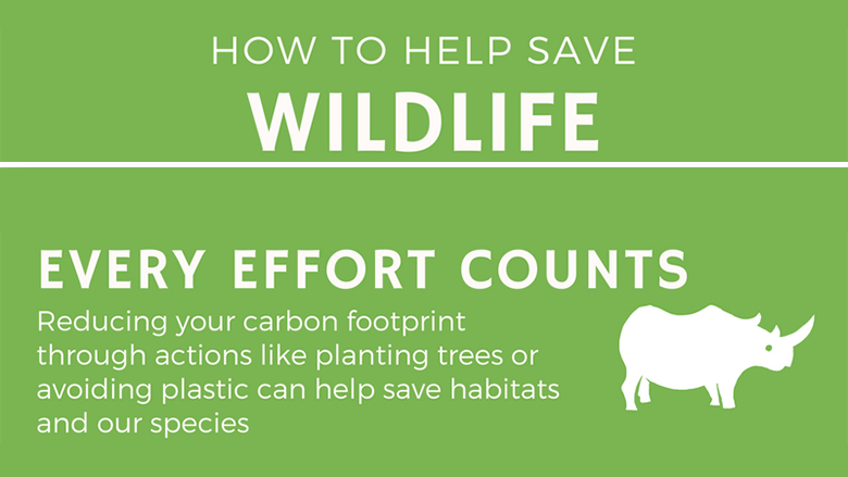 How to Help Save Wildlife