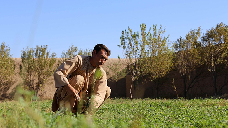 Agriculture represents an enormous opportunity for growth and better jobs for young entrepreneurs in Afghanistan. Photo: Rumi Consultancy