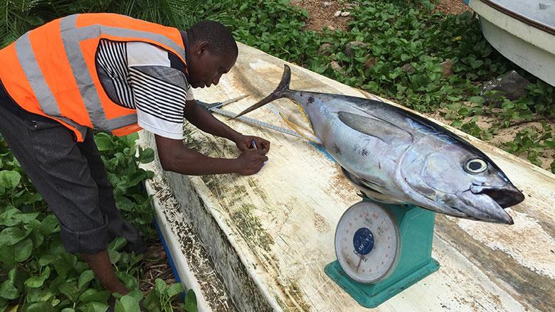 Africa Program for Fisheries