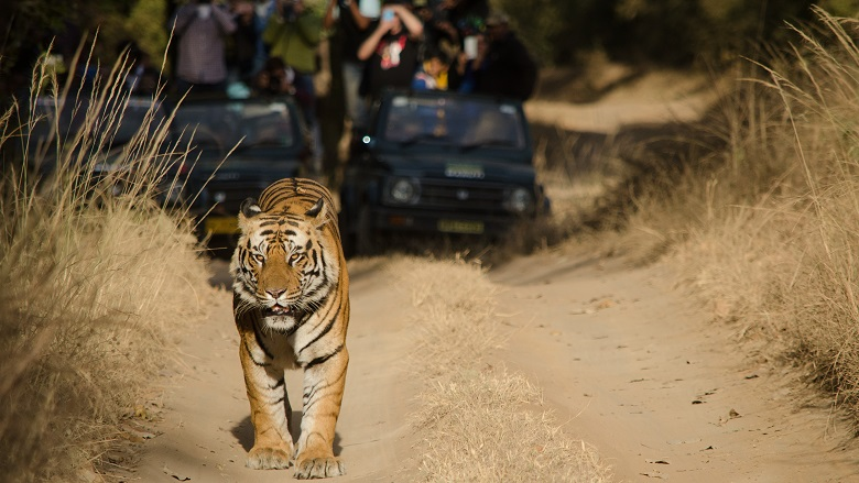 Growing Wildlife Based Tourism Sustainably A New Report And Q A