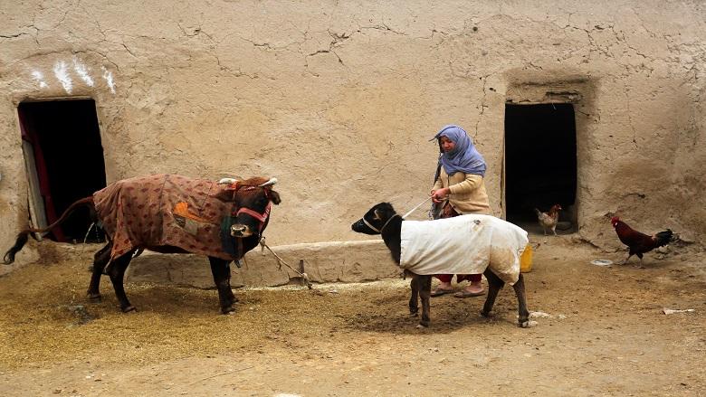 Afghanistan: Livelihood Grants Transform The Lives of Destitute