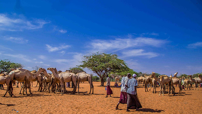 Image result for world bank food program kenya