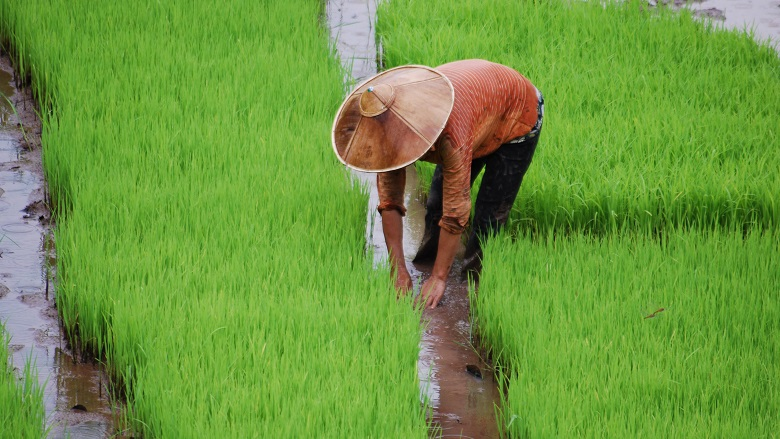 Commercialization of Rice and Vegetables Value Chains in Lao PDR: Status and Prospects