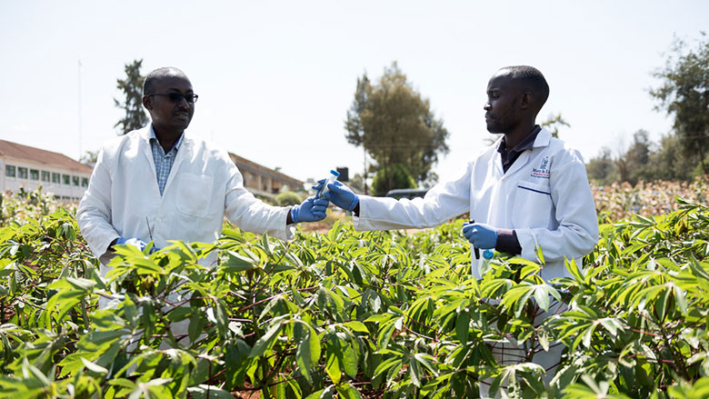 Kenya Economic Update: Transforming Agricultural Productivity to