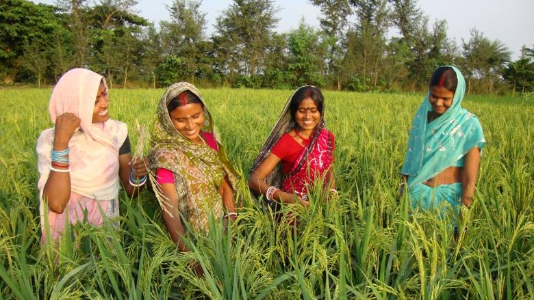 Projects : Bihar Rural Livelihoods Project -