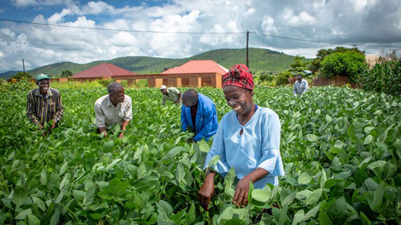 Zambia Agriculture Investment Plan Supports Climate Smart