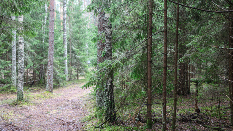 Forest Innovations: Towards Sustainable and Efficient Forestries in Belarus