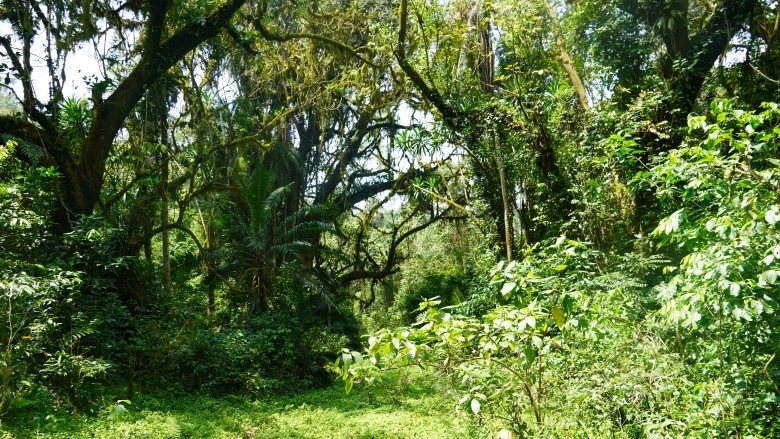 Kafa Biosphere Reserve, Ethiopia  - woods