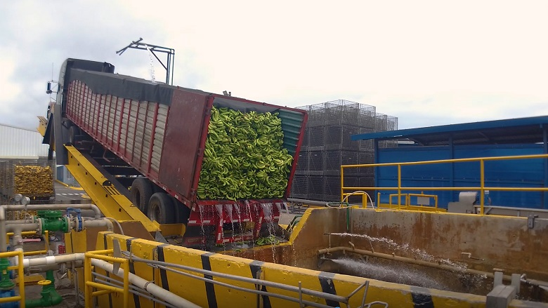 Green banana truck, Paradise Ingredients banana puree processor, Costa Rica.