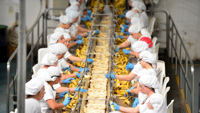 Workers at Paradise Ingredients banana puree processor, Costa Rica